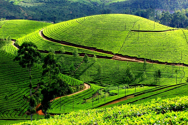 Munnar South India