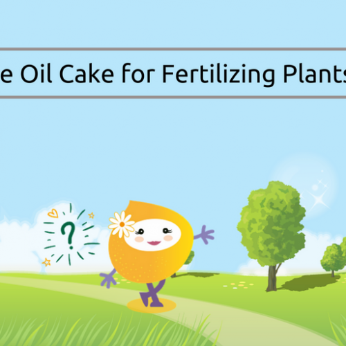 Use of Sesame Oil Cake for Fertilizing Plants