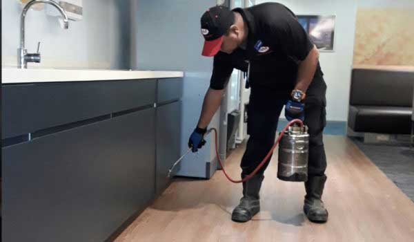 Pest Control Services To Ensure Your Family's Good Health