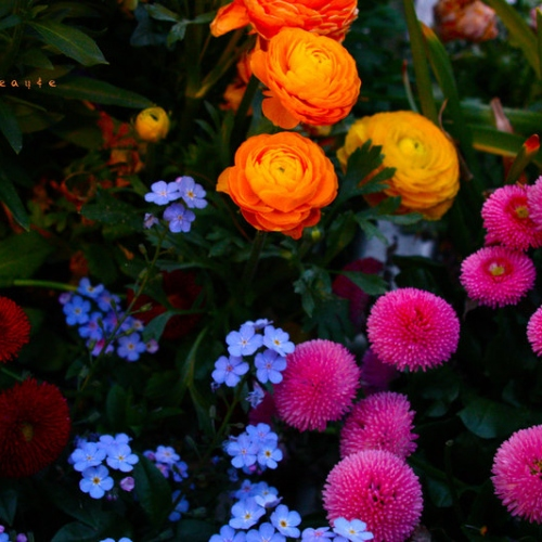 Interesting Facts To Know About The National Flower Of Germany
