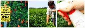 toxic free gardening, non-poisoned food