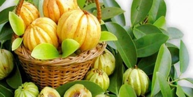 Miracles Of Garcinia Cambogia - Weight Loss Suppliment