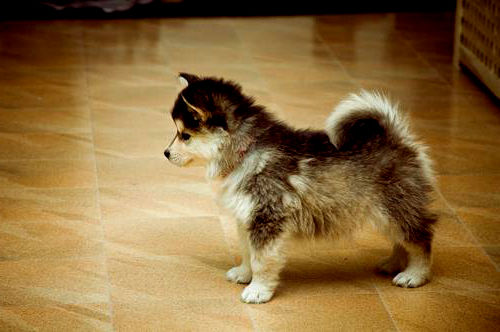 Fun and Furry: Cute Dog Breeds For Everyone