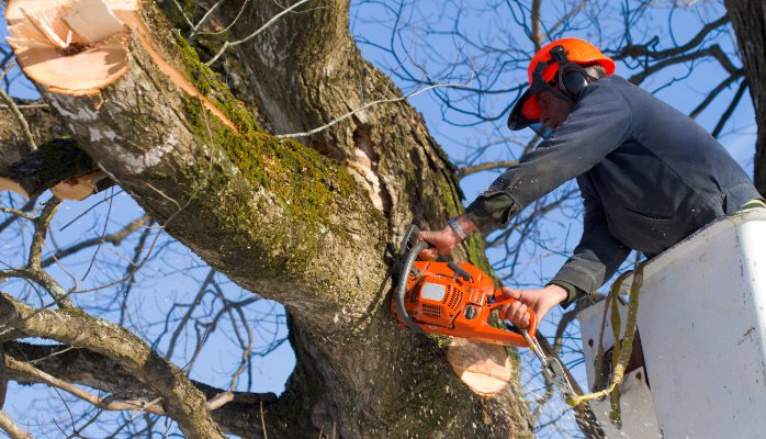Experts At Tree Surgery In Slough