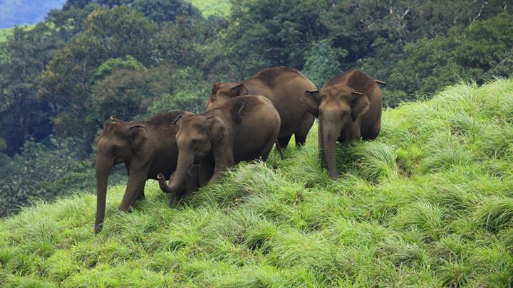 Idduki wildlife sanctuary