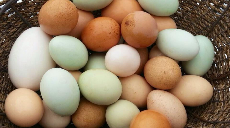 How To Start Your Own Chicken Farm- Poultry Raising