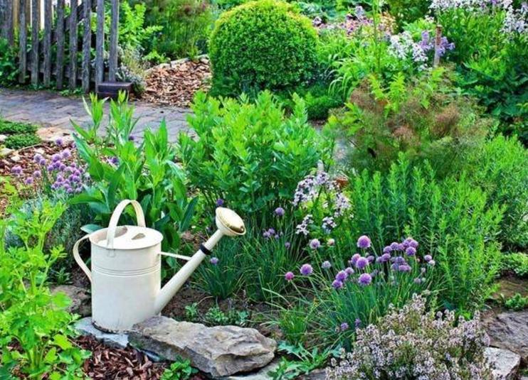 Grow A Fresh Herb Garden