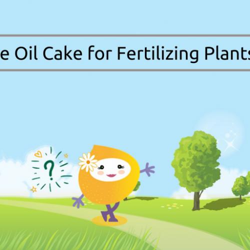 Use of Sesame Oil Cake for Fertilizing Plants