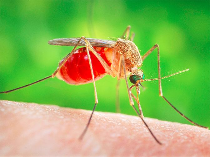 Do You Fear Dengue Now You Don't Need To