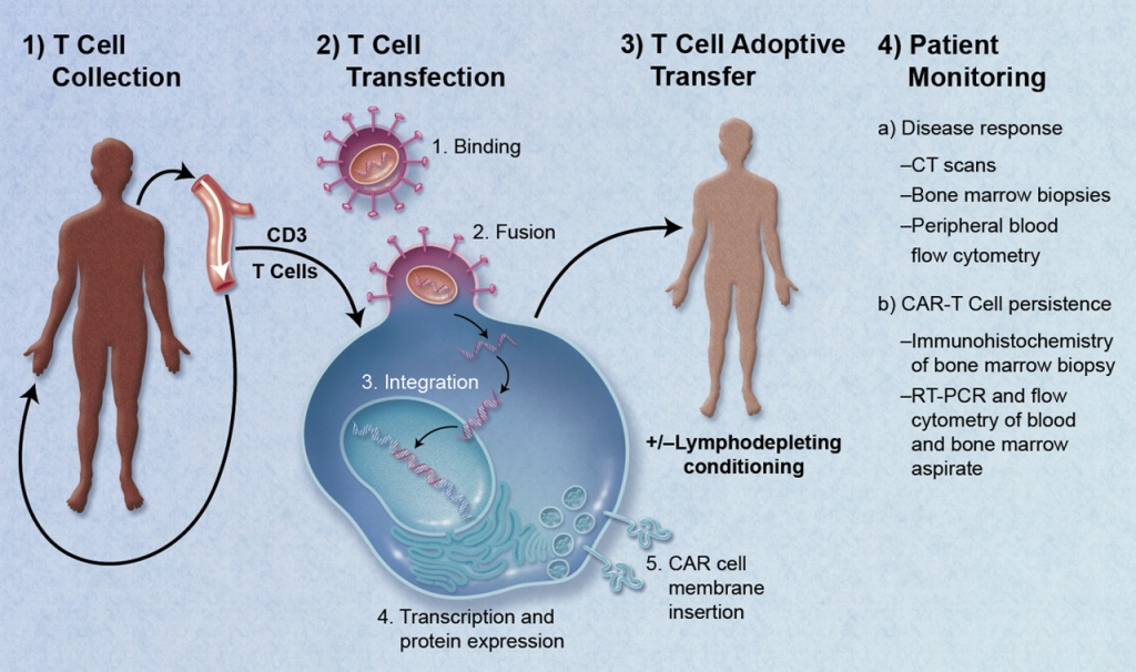 Engineered T-Cell Therapy Revolutionizes Cancer Treatment