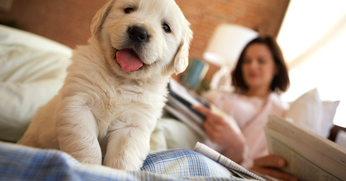 Choose A Lovable Puppy For Your Home And Have An Adorable Companion