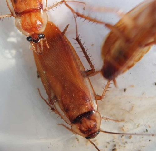 The Top 4 Definite Signs That You Have A Roach Infestation