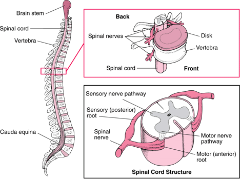 All You Need To Know About Spinal Cord Injury